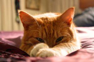 cat in the sun, lay verses lie, sean catt